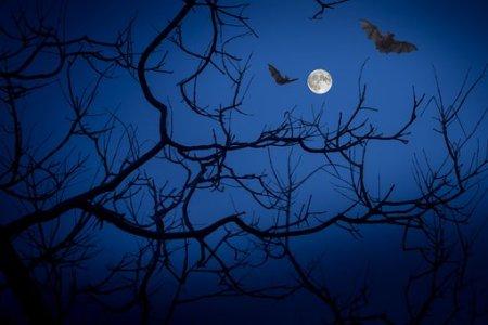 Full Moon, Night, Bats, Darkness