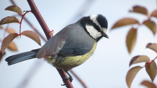 veautiful birds of Africa