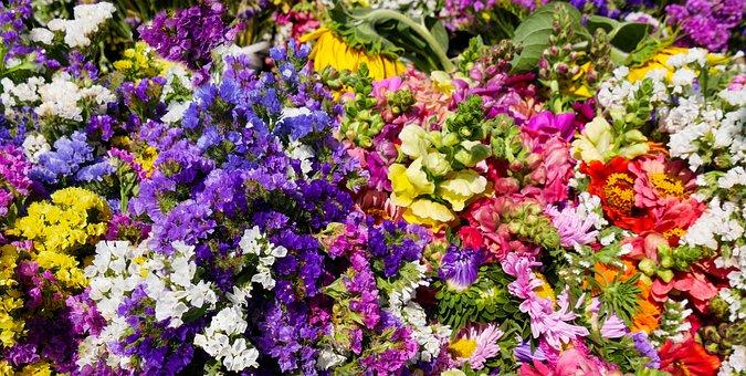 Nature, Flowers, Blossom, Bloom, Garden