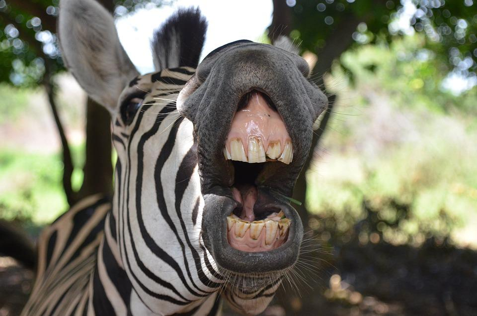 Tiere Humor Kostenloses Foto Auf Pixabay