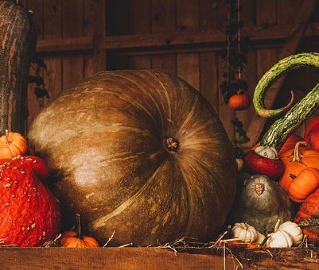 Still Life Pumpkin Autumn Orange