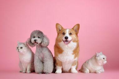 Haustiere, Niedlich, Katze, Hund
