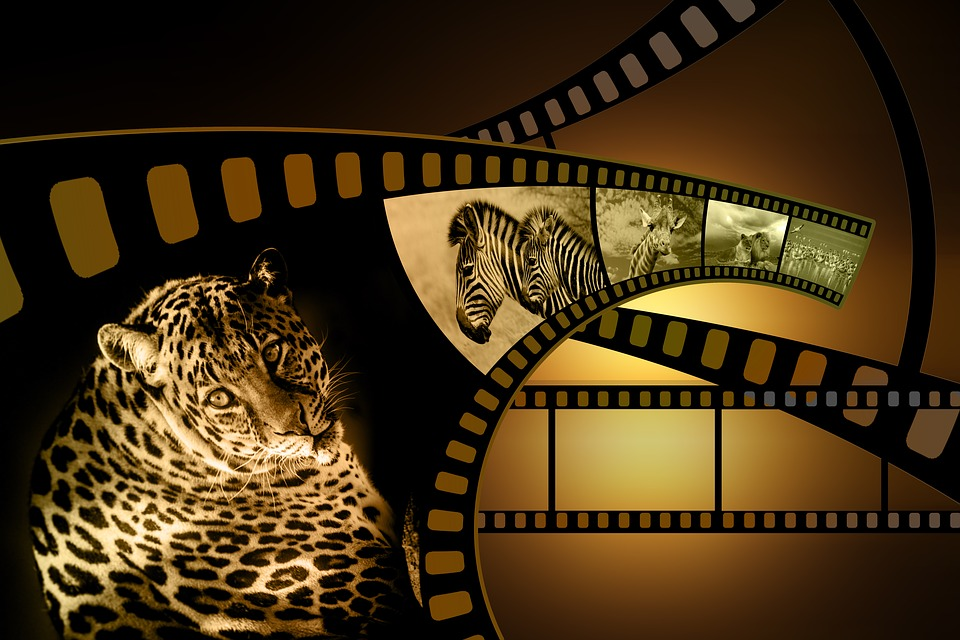 Fotografia Filme Rolo De - Imagens grátis no Pixabay