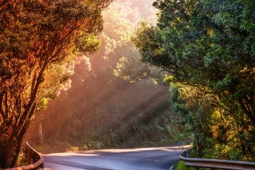 Natura, Paesaggio, Strada, Raggio Di Sole, Sera Sole