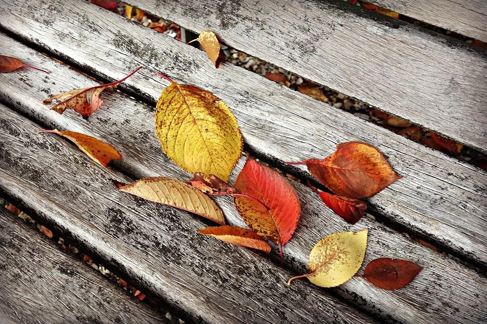 autumn leaf 3871843 960 720
