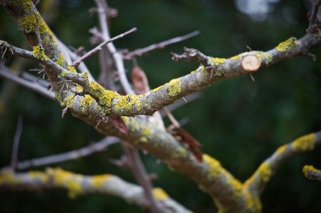 Trockene Zweige mit Moos besetzt