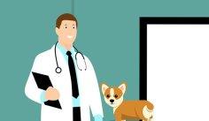 Efp, Médecin, Chien, Chiot, Vétérinaire