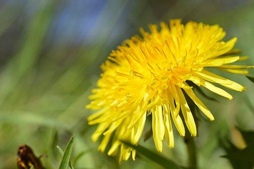 get rid of weeds in the garden