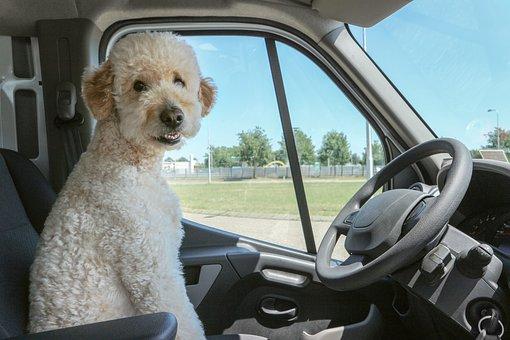 犬, 面白い, ペット, 動物, 可愛い, 子犬, ハッピー, 愛らしい