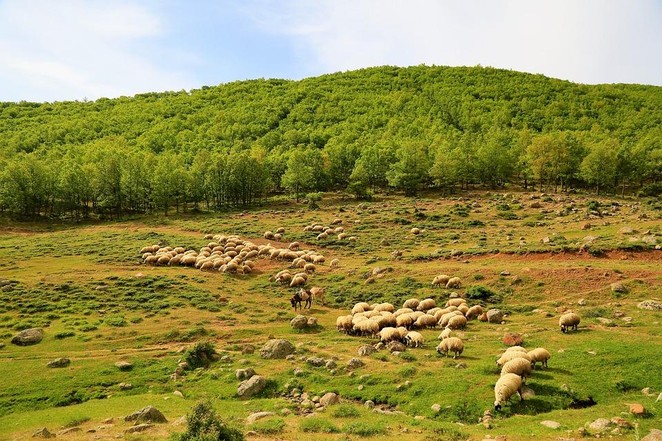 Çoban ve Misafiri