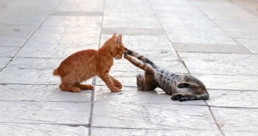 猫, 戦う, 若い, 再生, 猫の赤ちゃん, 動物の世界, 遊び心, バックライト, 子猫, 国内の猫, 運動