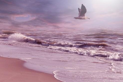 Landscape, Fantasy, Fantasy Landscape, Seagull, Flying
