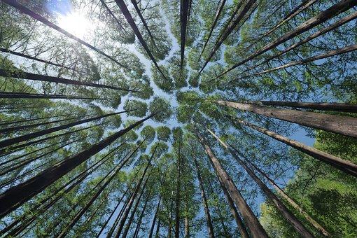 Arbre, Des Forêts, Nature, Arbre, Arbre
