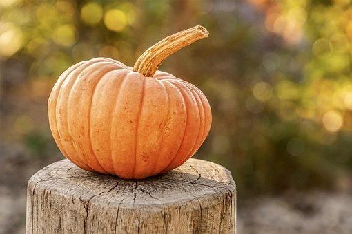 Pumpkin, Autumn, Harvest, Halloween