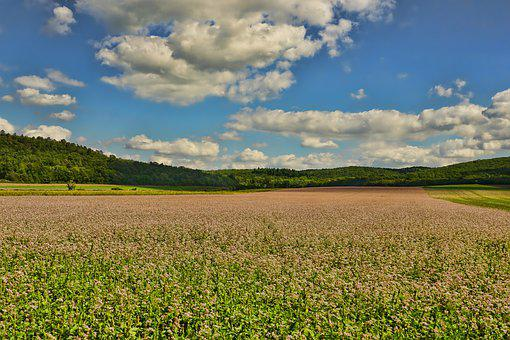 growing cover crops