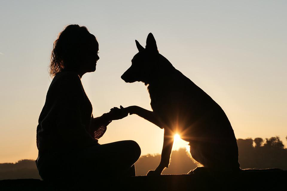 友情, 動物, 人間, 日の出, 握手, ペット, 友人, 犬, 女の子