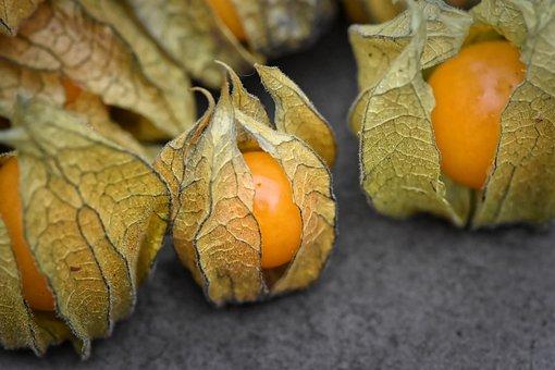 Physalis, Fruits, Berry, Orange, Fruit