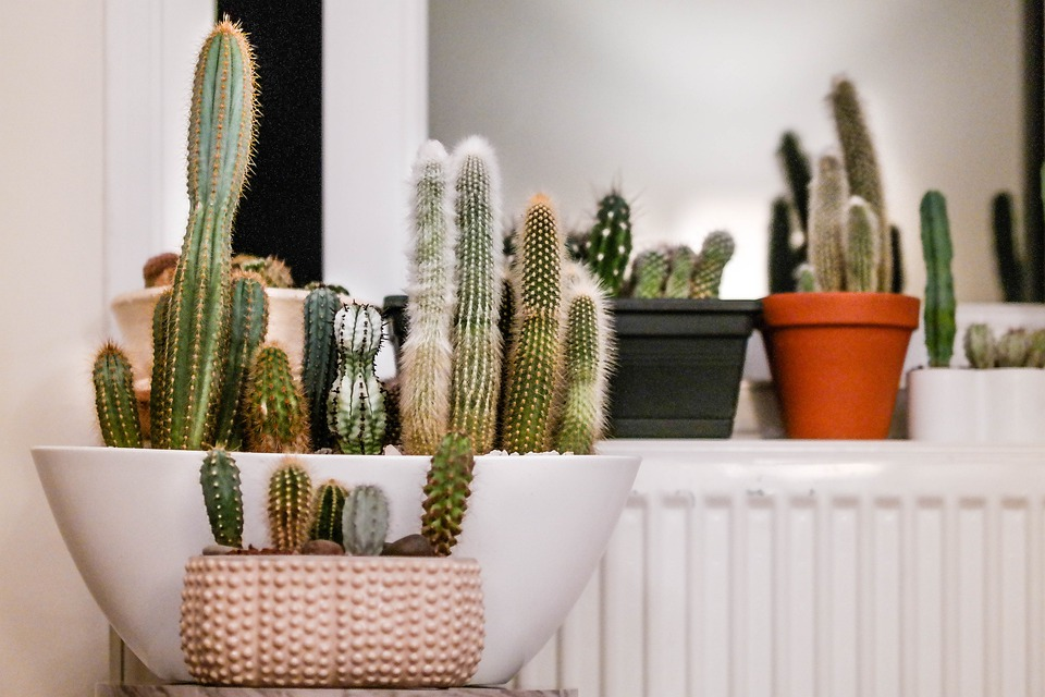 Cactus Houseplants Houseplant - Free photo on Pixabay
