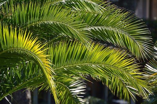 Palm, Dimanche Des Rameaux, Hosana