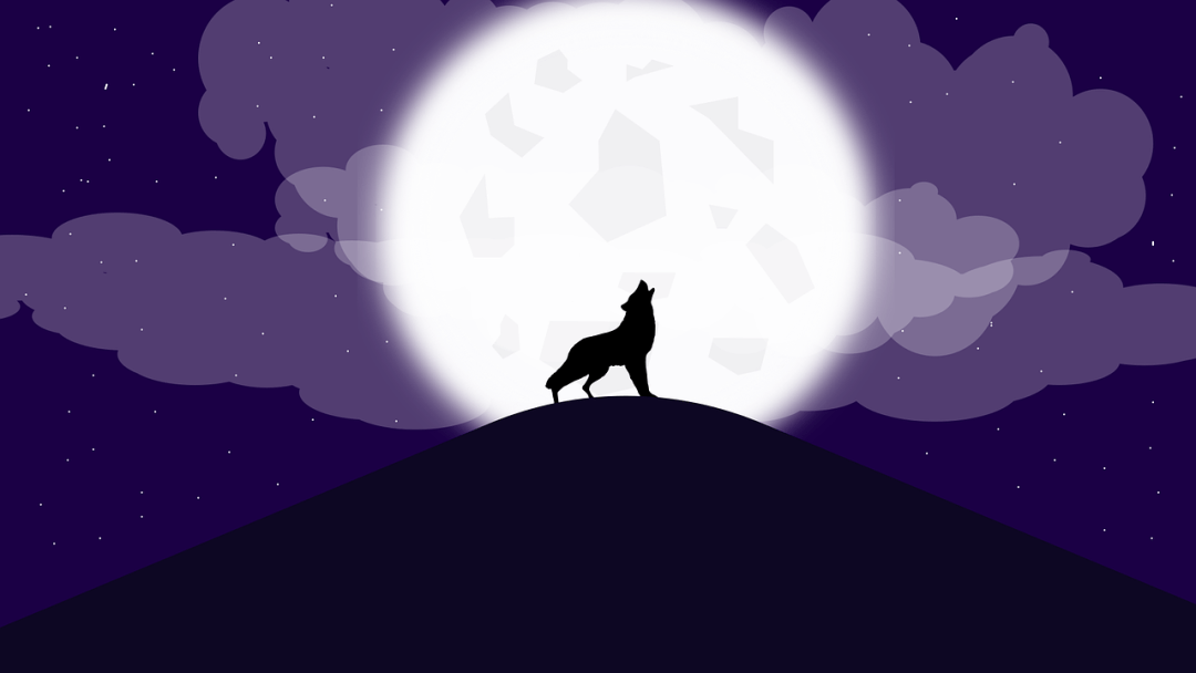 image de loup garou