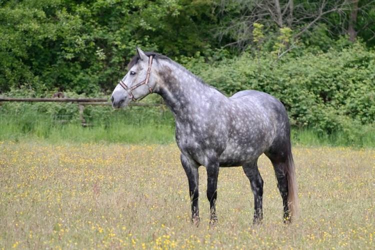 Dapple Horse Neck - Free photo on Pixabay