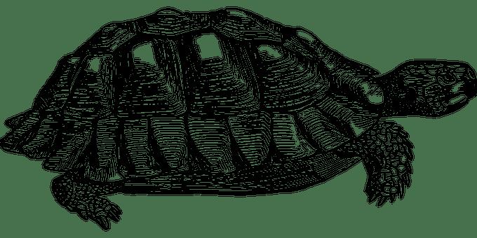 tortue images vectorielles