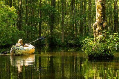 Millpond, Cypress Swamp, Kayak