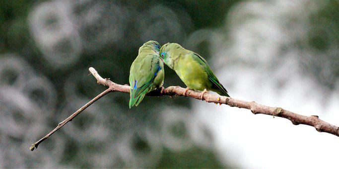 80 Free Lovebirds Bird Images Pixabay