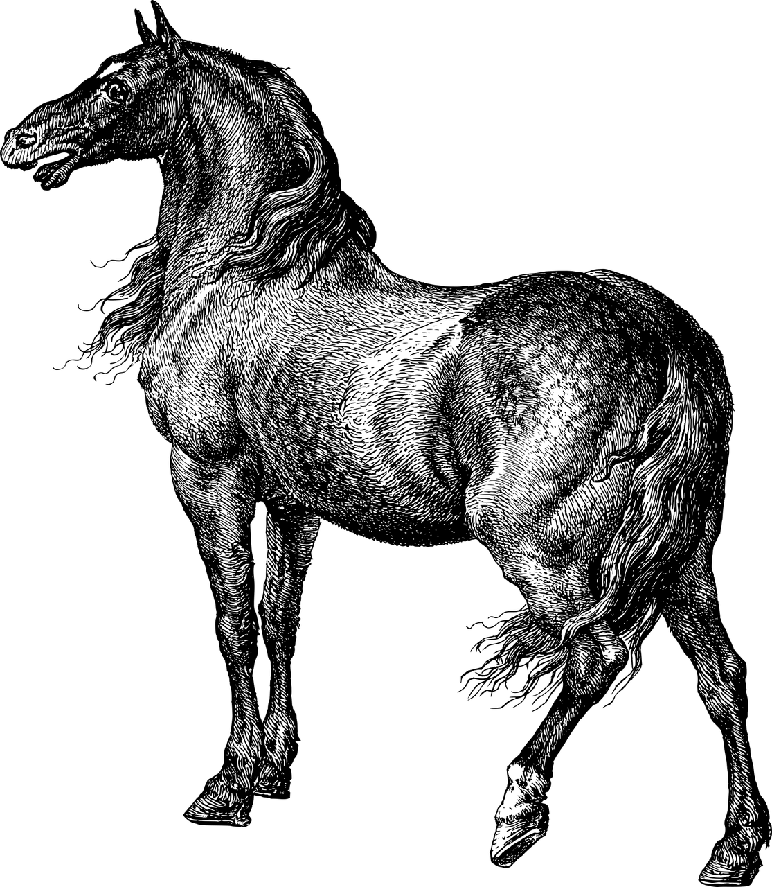 Horse Animal Line Art Free Vector Graphic On Pixabay