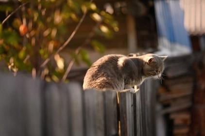 猫, フェンス, 木造, ハローキティ, 子猫, ネコ, ペット, 猫にフェンス, 木製フェンス, 分界