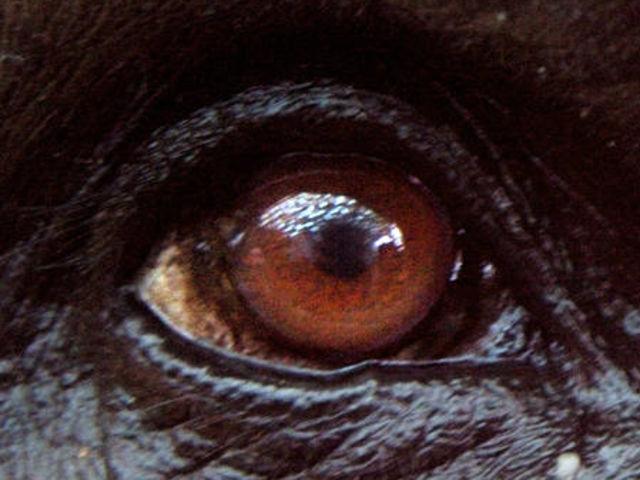 Tente adivinhar qual é o animal apenas pelo olho!
