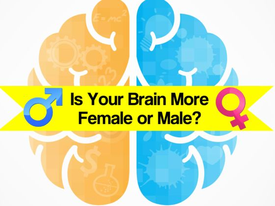Is Your Brain More Female or Male?