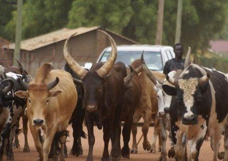 Taraba Emir orders herdsmen to vacate forests in 30 days