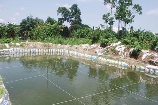 an aquaculture hub in Eriwe Ogun state