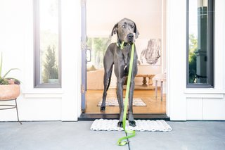 Incredible high-tech gadgets for your pets and yourself image 2