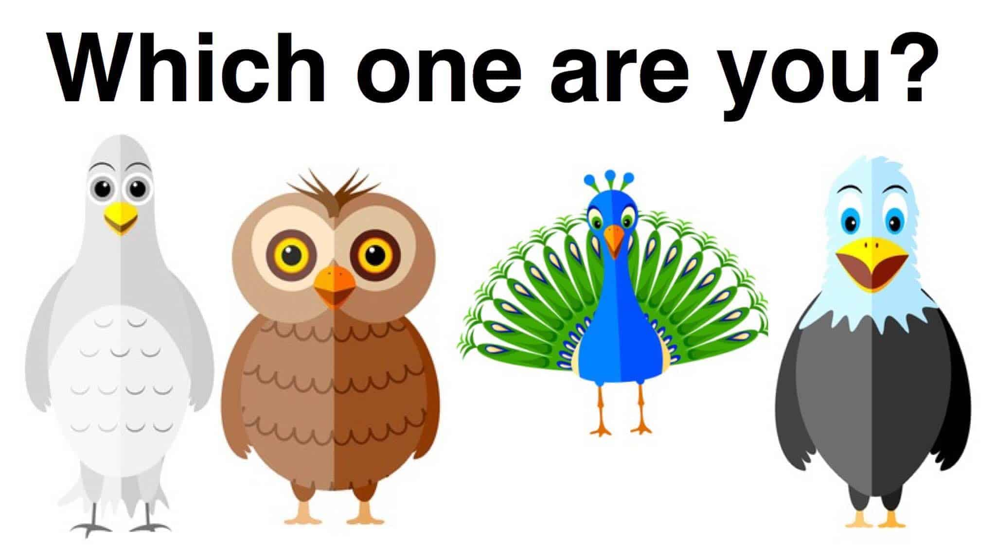 Which Bird Personality Type Are You