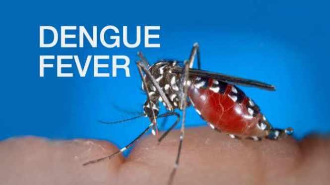 Image result for Dengue fever images