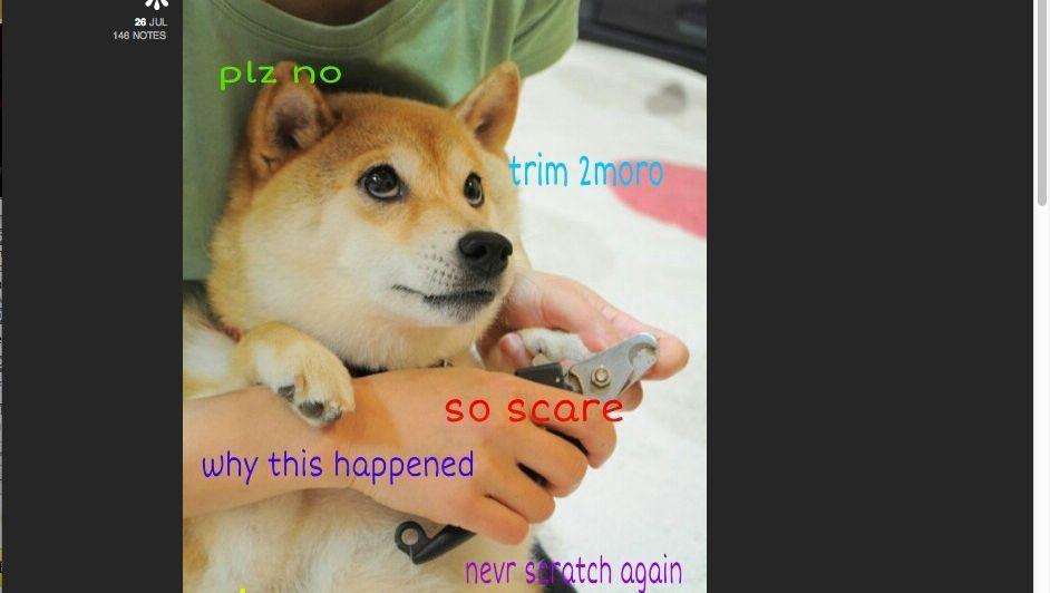 Portfolio Hunde Meme Jackys Fotoarts Webseite