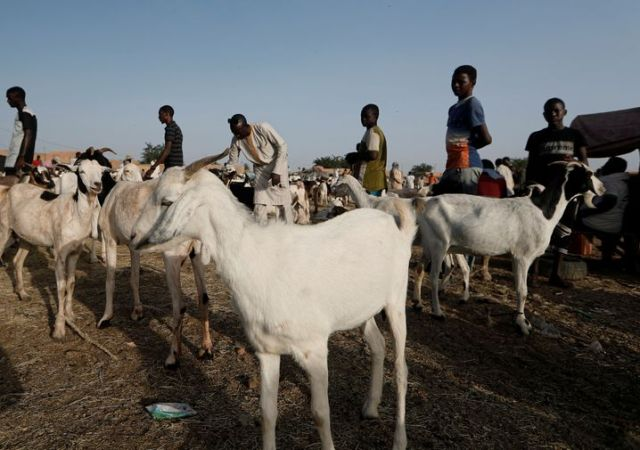 Sometimes, the price of goats can provide a clue to an unfolding wave of migration.