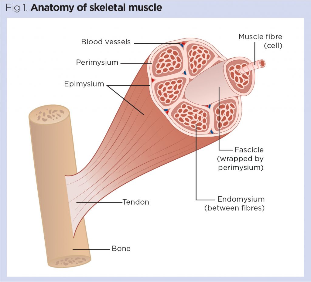 Skeletal System 2 Structure And Function Of The