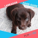 How Much To Feed A Lab Puppy 2020 Labrador Food Guide