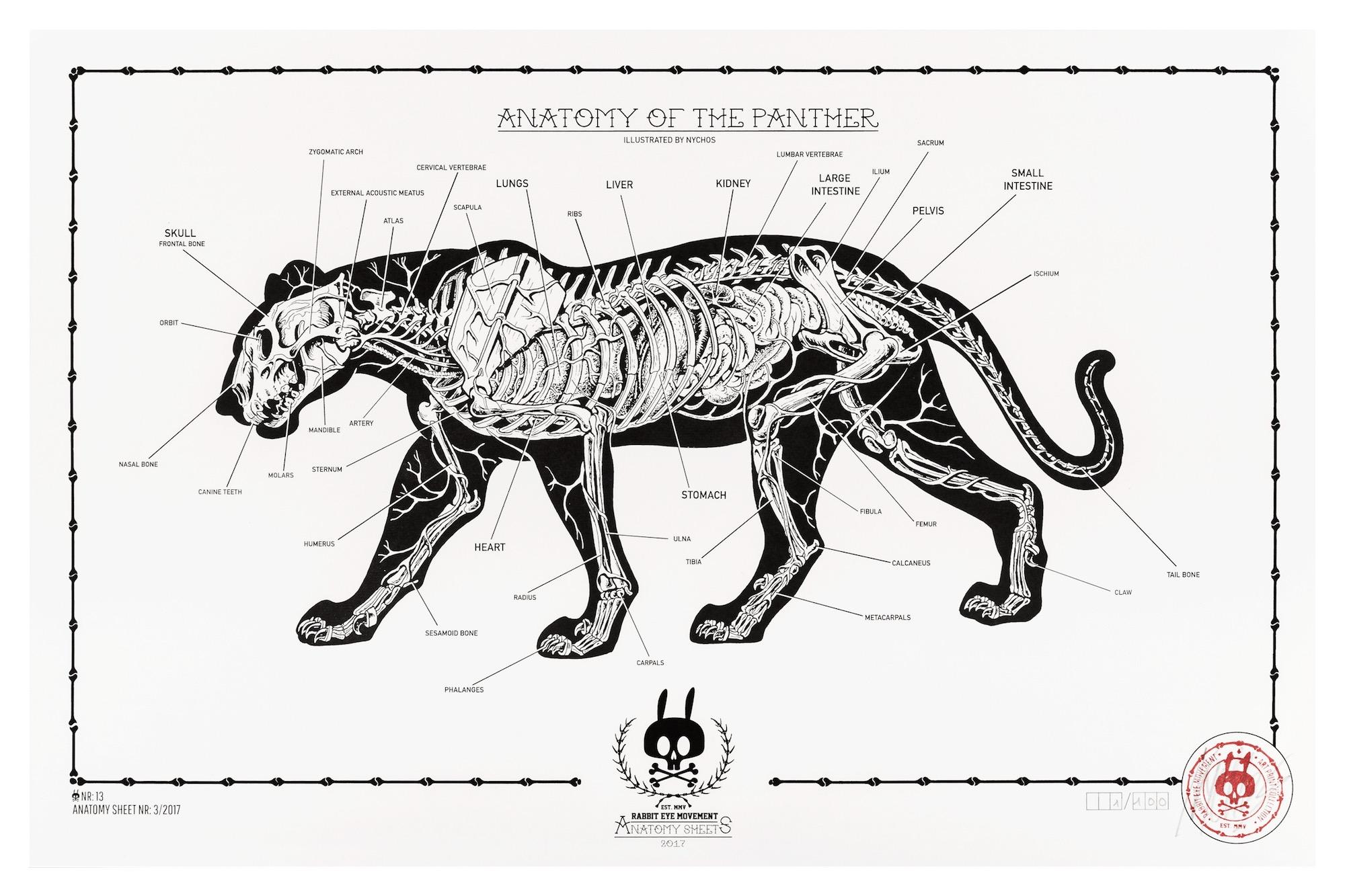 Anatomy Of The Panther Anatomy Sheet No 13