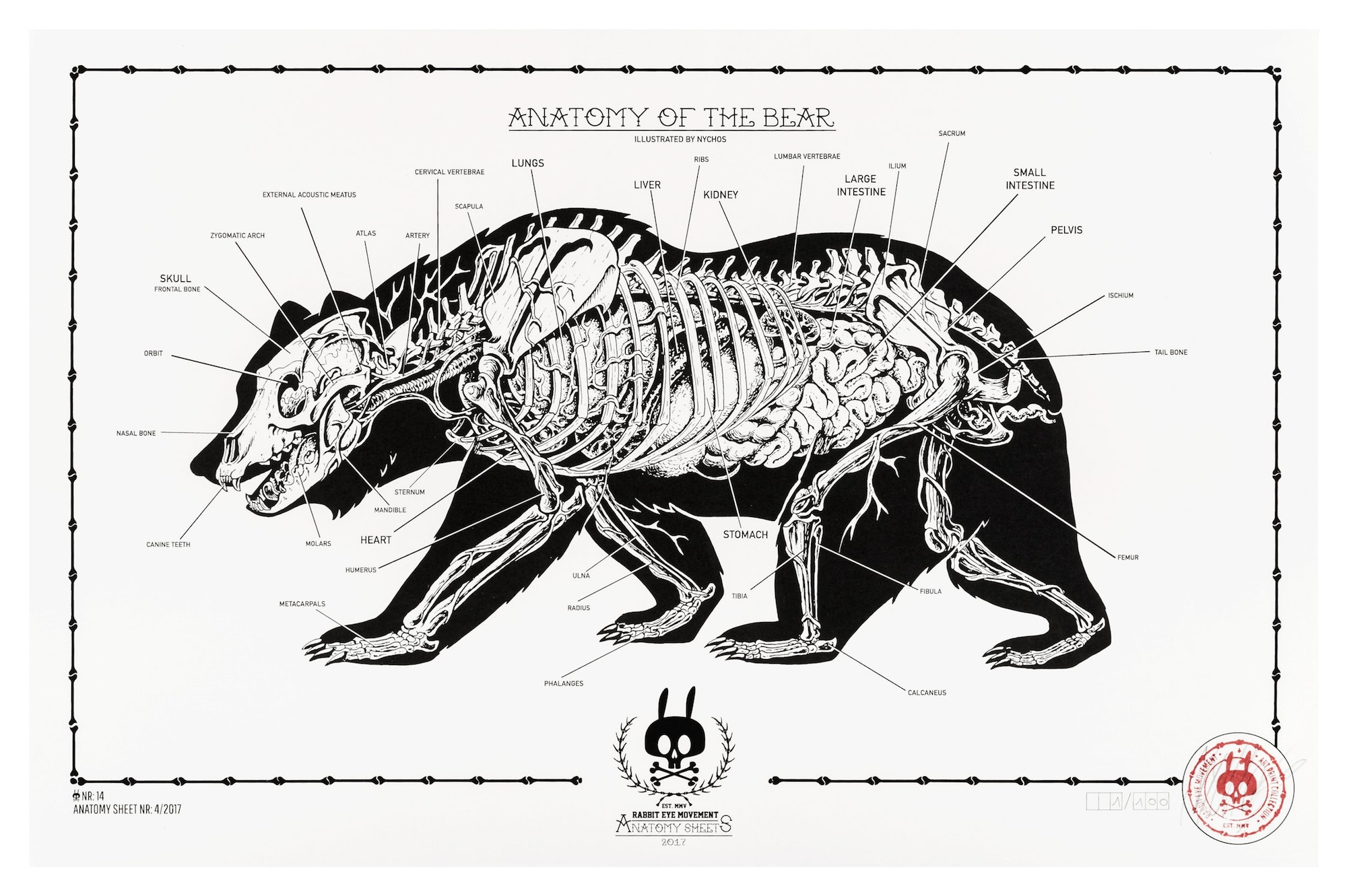 Anatomy Of The Bear Anatomy Sheet No 14