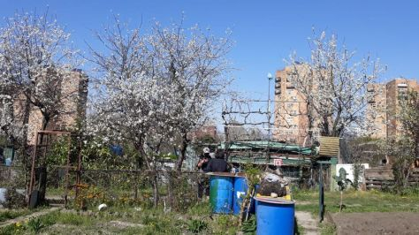 En bas des tours, les jardins ouvriers des vertus à Aubervilliers (93), avril 2020