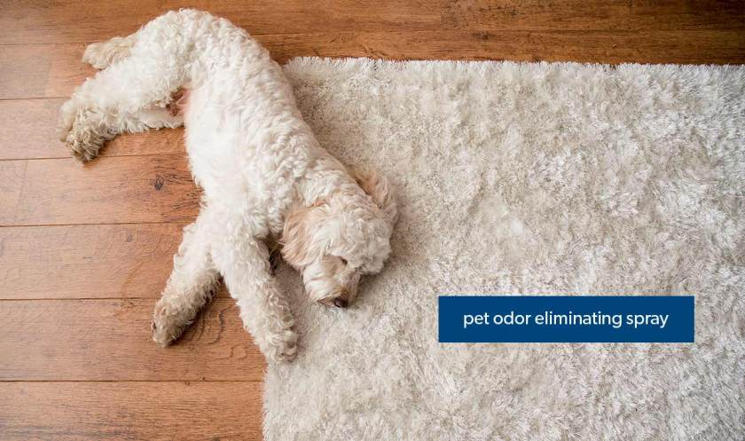 How to Stage a House That Sells: Keep the Pets Away