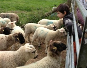 Little Isaac Skey makes some new friends on the farm!