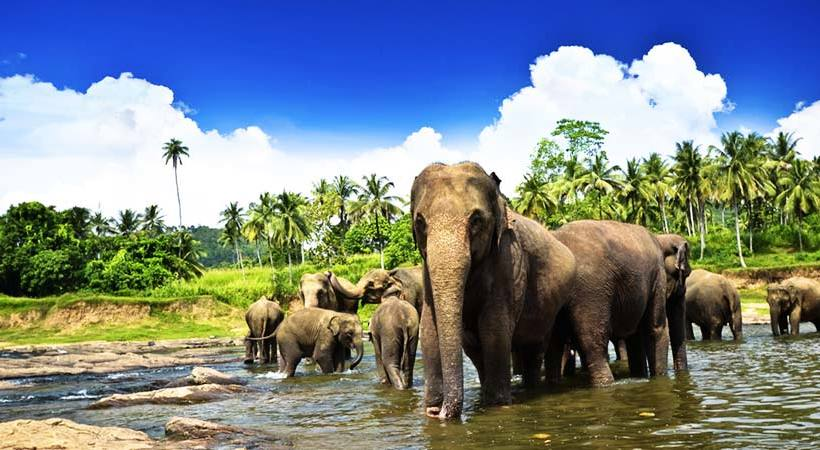 Image result for pinnawala elephant orphanage