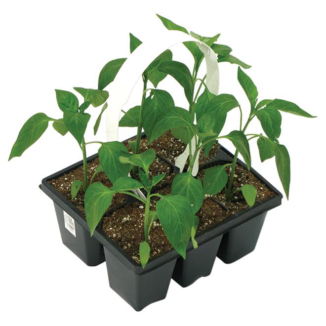 HARVESTHYME Vegetable Plant 6 Pack 740011 Rno Dpt