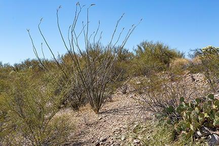 0 N 513 Acres, -, San Manuel, AZ 85631