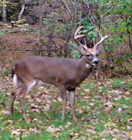 Wolf Creek Rd., Robbins, TN 37852